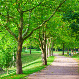 Walkway / path in a park bordered by trees