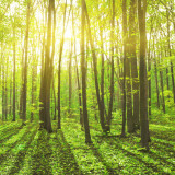 photo of trees and rays of sunlight