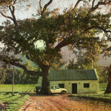 house and large tree at edge of a field
