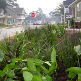 bioswale in a residential development