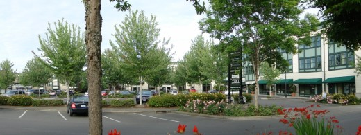 Portion of parking area serving the Town Center shops.