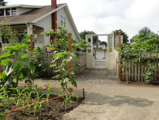 Planting strip in a Portland, Oregon, neighborhood