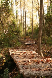 Hiking trail. Photo courtesy of Haw River Trail.