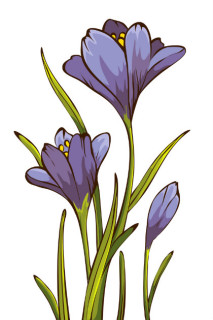 illustration of a crocus