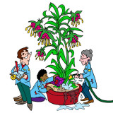 Illustration by Marc Hughes for PlannersWeb - watering a healthy native species plant